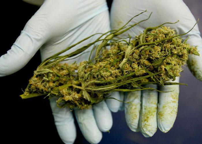 კანაბისი - წამალი თუ ნარკოტიკი?