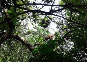 კანაფის ხეზე მოყვანის მეთოდები