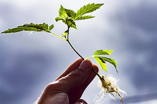 როგორ გადავრგოთ მცენარე