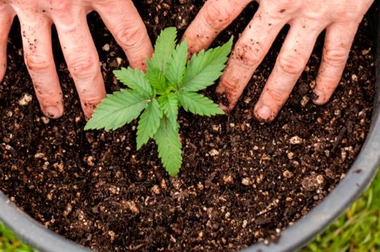 როგორ მოვრწყათ და დავამატოთ მცენარეს სასუქი